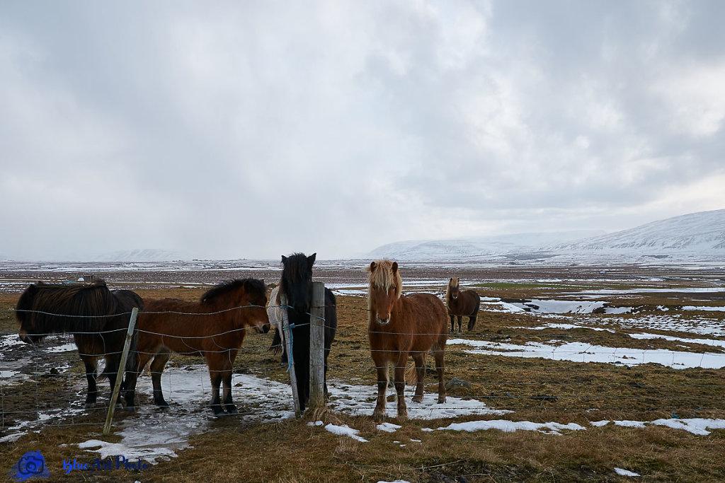 Islande-015.jpg